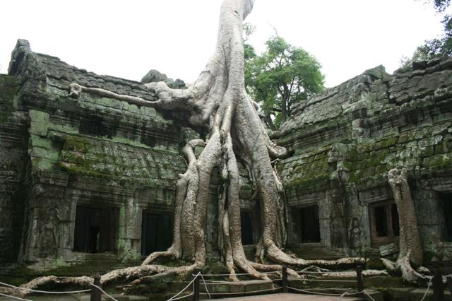 th_ta-prohm