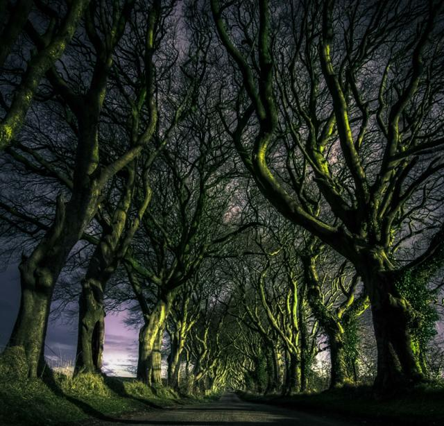 th_the-dark-hedges