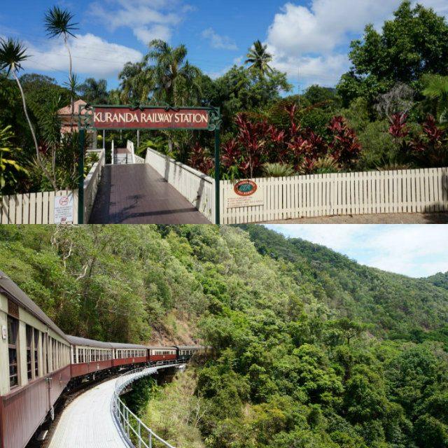 オーストラリアのリゾート・ケアンズの熱帯雨林