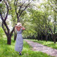 旅先で出会う樹木から昔の人に想いをよせる