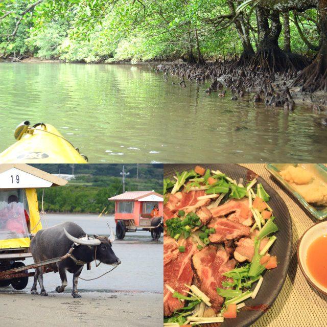 西表島ならではの魅力を味わう内陸部の旅