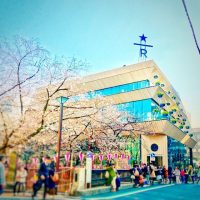 日本初出店の高級スタバの見どころ