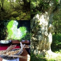 世界遺産・屋久島旅で縄文杉や苔むす森へ